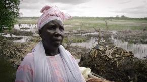 Guinendadi, la via guineiana allosviluppo